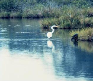 photo of egret
